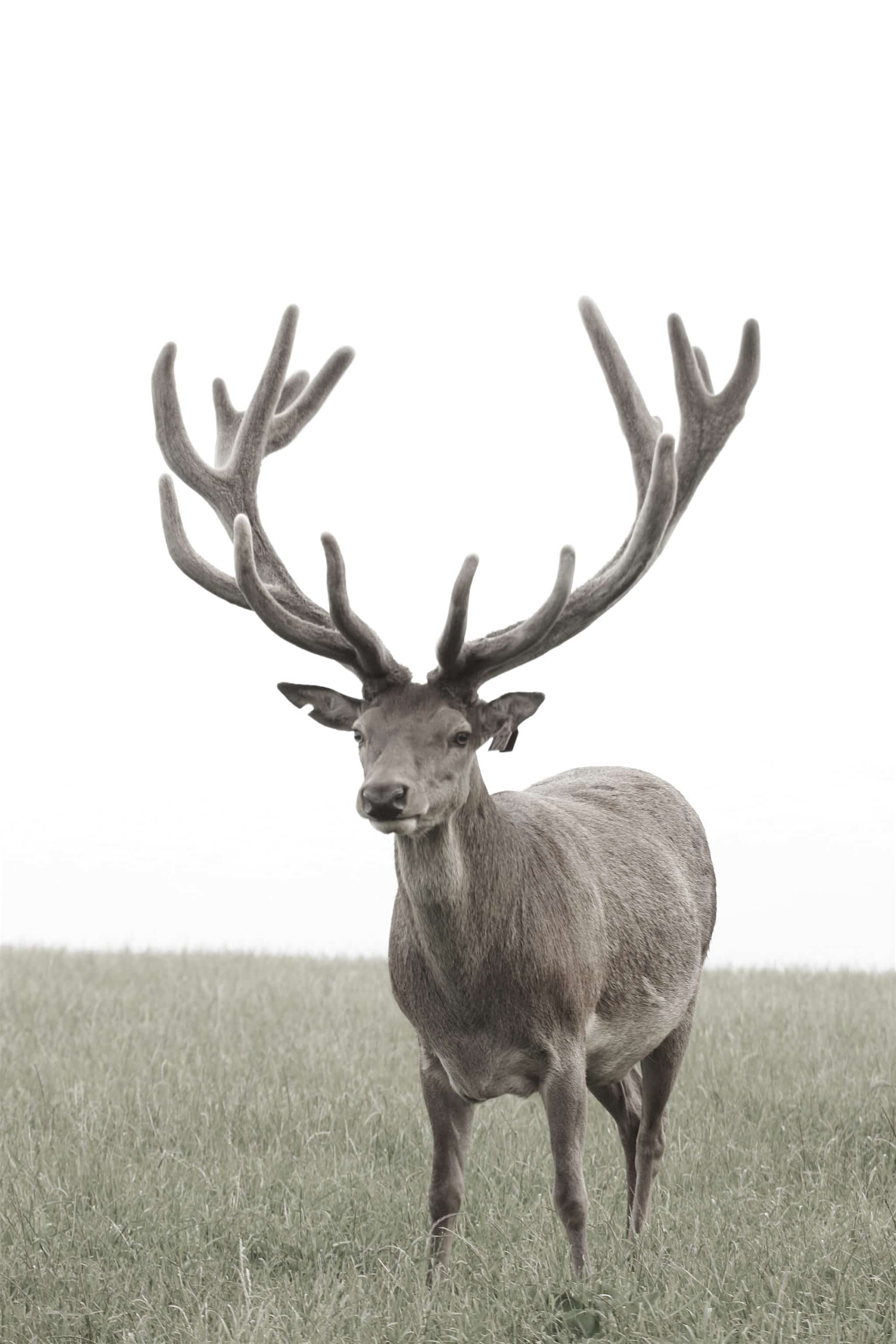 2006_1129Stags0146